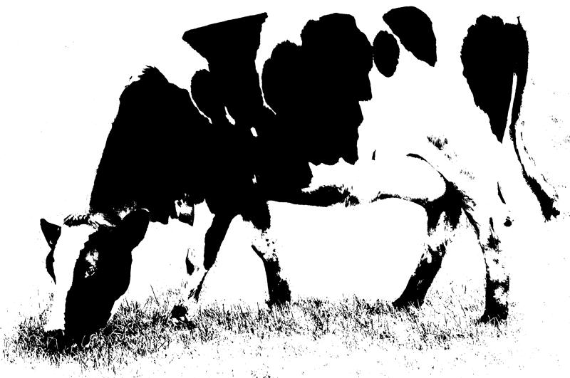 The Milking Parlour Logo Design by Certo Design, Sabden